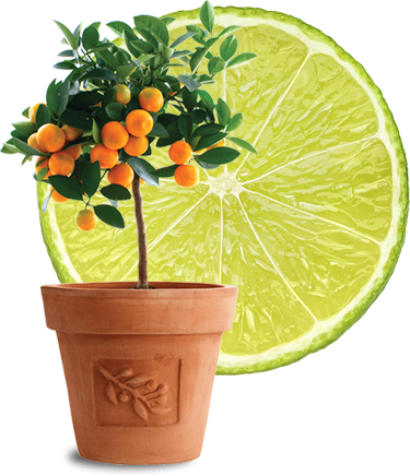 callout-protect-your-citrus-trees